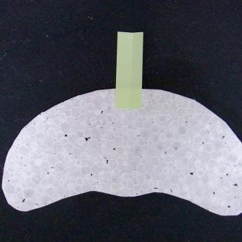 アルソミトラマクロカルバの種を模倣して作ったグライダー
